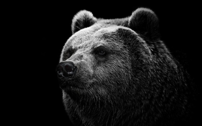 Random List: 9 Stories Involving Bears