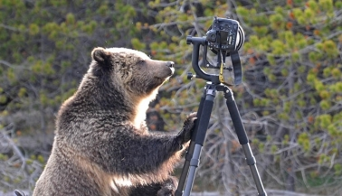 lens-rentals-bear-featured
